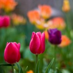 Spring Cleaning In and Outside of Your Home