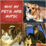 My Cats and Dog Are MVPs! (+Giveaway) #PurinaMVP | Optimistic Mommy