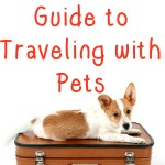 The Ultimate Guide to Traveling with Pets