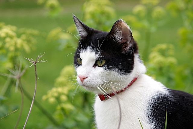 Specialist Brush Long Hair Cat