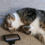 Must-Have Gadgets And Accessories That All Cat Owners Need To Own