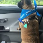 Treat My Pug To a Spa Day with Petco Grooming #PetcoGrooming #MM