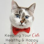 Keeping Your Cats Healthy & Happy During The Holidays #CLUMPandSEAL