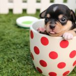 How To Train Your Puppy To Potty In No Time