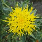 5 Satisfying Reasons Why Your Body Needs CLA Safflower Oil