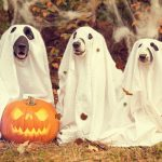 Keeping Your Hound Safe This Halloween