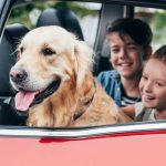 How To Travel Safely and Securely With Your Dog In The Car