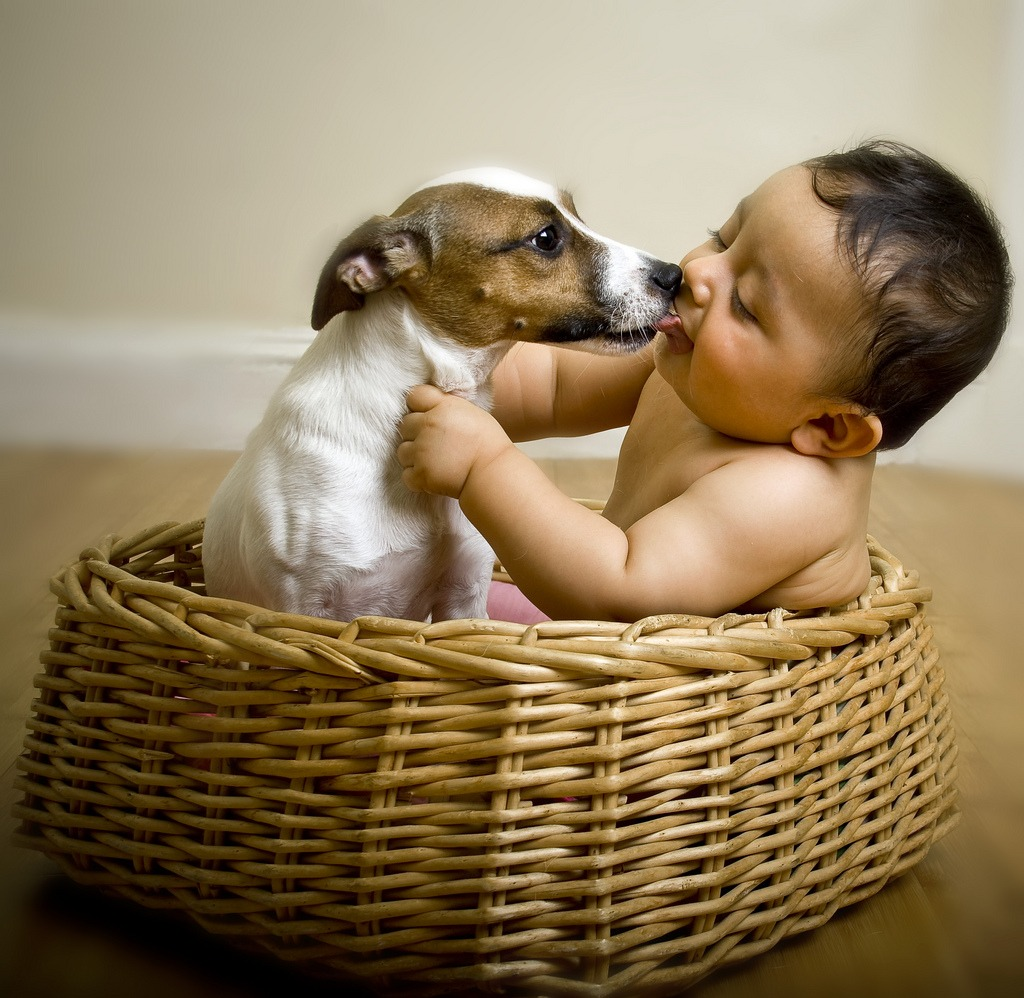 Baby Picture With Jack Russel Puppy