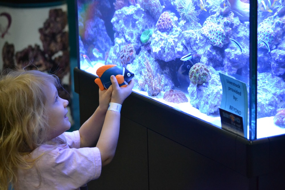 November 7-9, 2014 we had the wonderful experience to go to the World Pet Association's Aquatic Experience in Chicago, Illinois.  From freshwater to saltwater, they had everything for fish lovers! #OMTravels | Optimistic Mommy