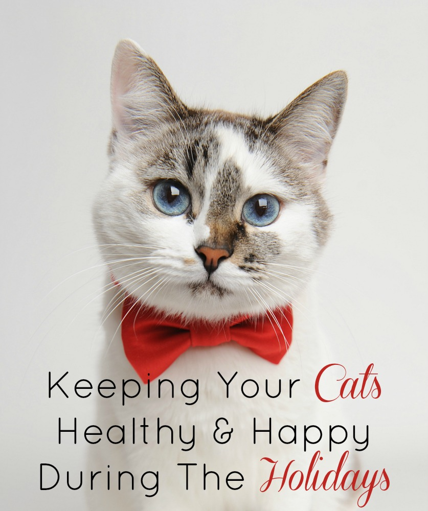 Keeping Your Cats Healthy & Happy During The Holidays | Optimistic Mommy