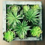 A Living Wall: Framing Living Plants