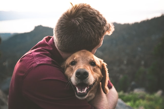 Emotional support pets vs service pets: what's the difference?
