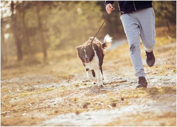 dog on the walk